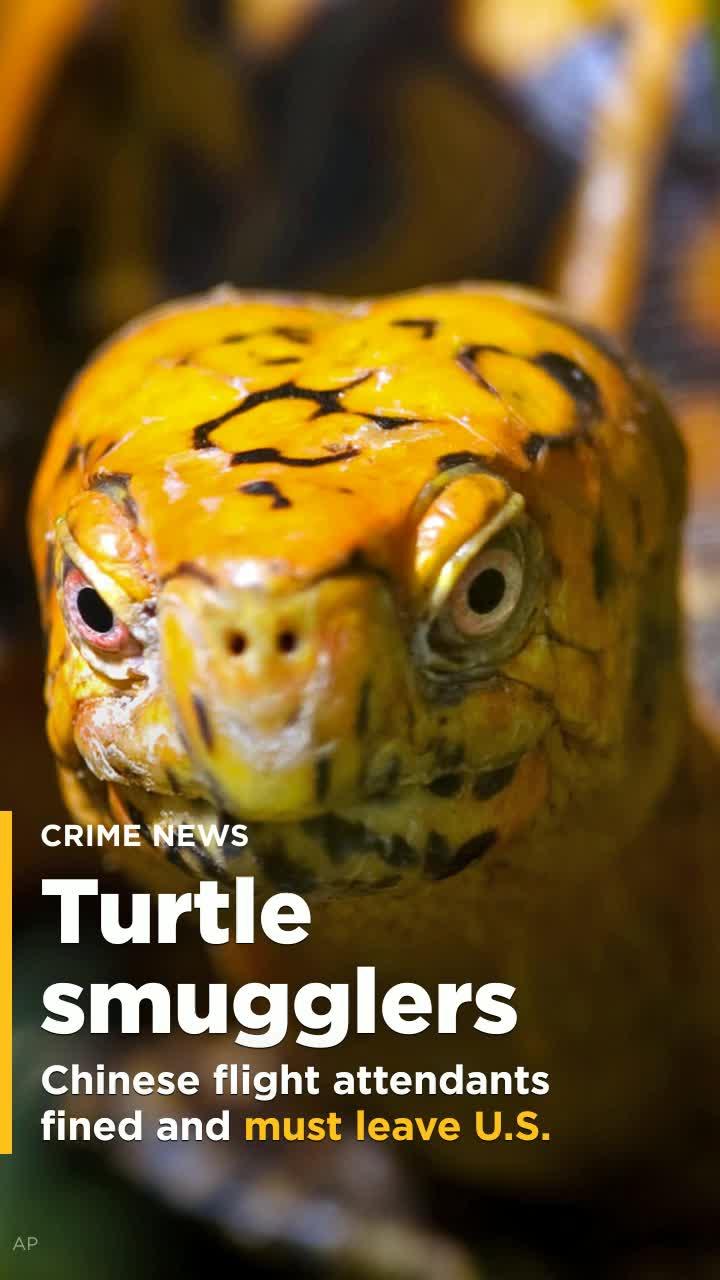 Channel 4 dating tortoise forum